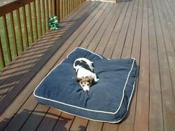 sunnydaydogs_011